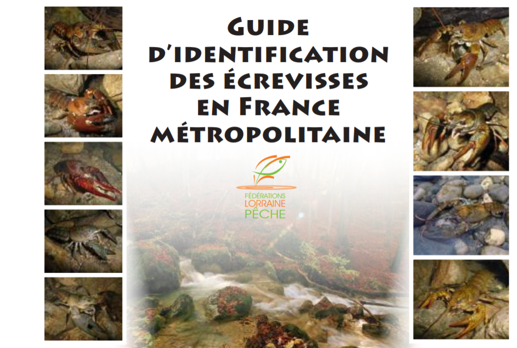 Couverture_guide_identification